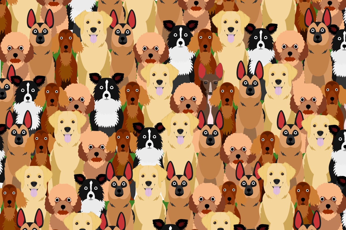 Brits are being challenged to spot the rare dog in this brainteaser in under 24 seconds – so can YOU find the pooch?